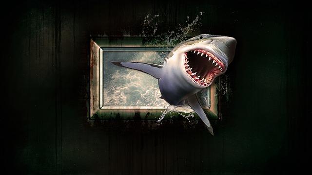 shark-1626288_640