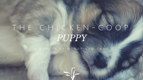 The Chicken-Coop Puppy